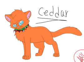 Ceddar (Caveclan rouge?) by nikkithedog3