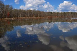 Swamp Reflections 3-14-12 by Tailgun2009