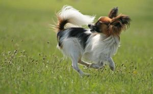 papillon by lovable-moments