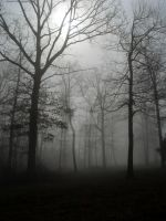 Foggy Woods 1 by InKibus