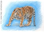 Prowling Tiger by LinzArcher