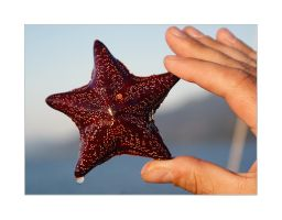 Starfish by AnnAntonina