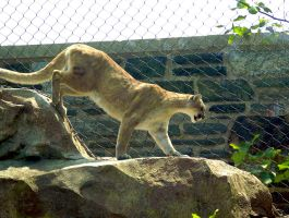 Philadelphia Zoo 110 by Dracoart-Stock