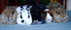 Our Bunnyfamily by Calitha-Lena