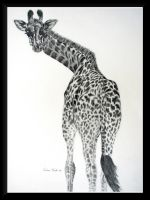 Giraffe by dove-51