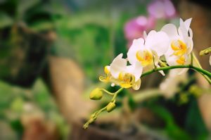 wiry white orchid by el-desant