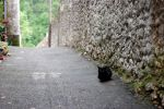 Cat and path by hakfest-stock