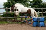 Our new Gypsy Cob. by BangGoesReality