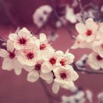 Blossom III by FlabnBone