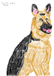 A German Shepherd by Massica