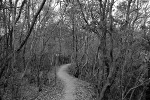 forest in black and white by rayna23
