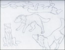 x_   Wolf Sketches .,, by CyberTiger