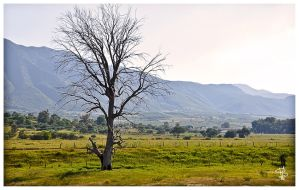 The Tree by the Road by SimonVelazquezArt