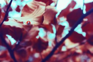 Late Season Ladybird by UntamedUnwanted