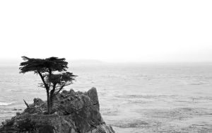 The Lone Cypress by CHritzel