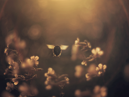 Bumble-bee by FrantisekSpurny
