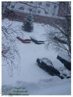 2010 15 02 Snow Pictures 01 by lilly-peacecraft
