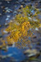 Natural Mirror by Scorpidilion