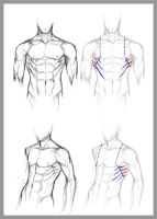 +SERRATUS ANTERIOR+ by jinx-star