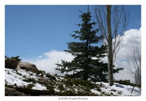 Snow Still Around by Astraea-photography