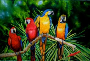 Macaws by terriwilson