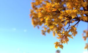 Acer DOF by armas777