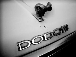 Dodge by timmywheeler