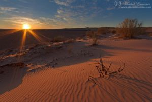 Dunes at Dawn by MorkelErasmus