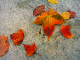 Leaves on the sidewalk by EvilAnemone