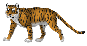 Tiger by Freewolf7
