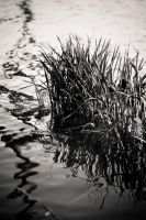 water and grass by RussellWarner