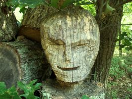 The Face in the Stump by BrownieParadox