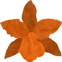 Orange Orchid by Frodoflo