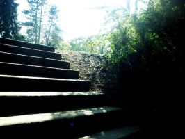 Steps in the light of silence by Chiqu