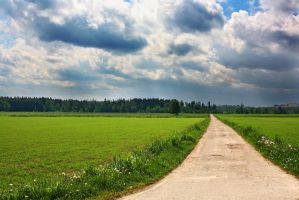 Way through the field by PhotoTori