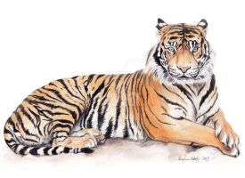 Tiger by meaghanr