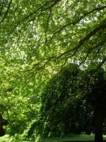 Shades of Green. by LiquidityImages