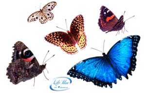 Butterflies - PNG by lifeblue