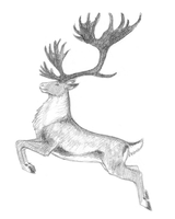 Deer Species Concept Sketch by TalonV