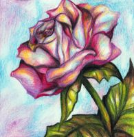 Rose Card by sivvus
