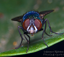 Housefly on the house 6 by lee-sutil