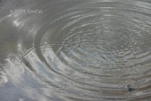 Rippling Rain Water Puddle by RooCat