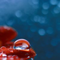 raindrops.2 by simoendli