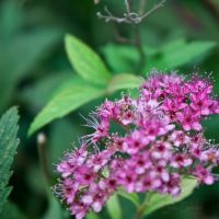 pink little flowers by sweeti800