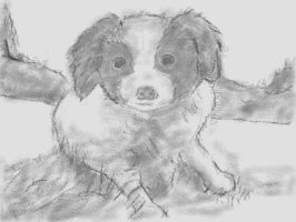 DSi Art Academy: Puppy Sketch by VATalbot