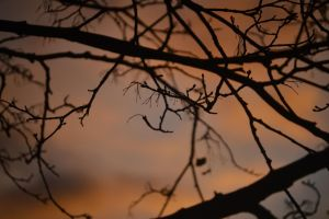 Evening branches. by IconicJohn