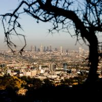 Los Angeles and a Tree by doninator