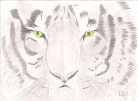 Tiger by diary1