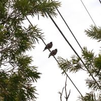 Two Birds On A Wire by smallcraig1606