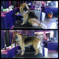 Thor Before  After by danceswithmutts